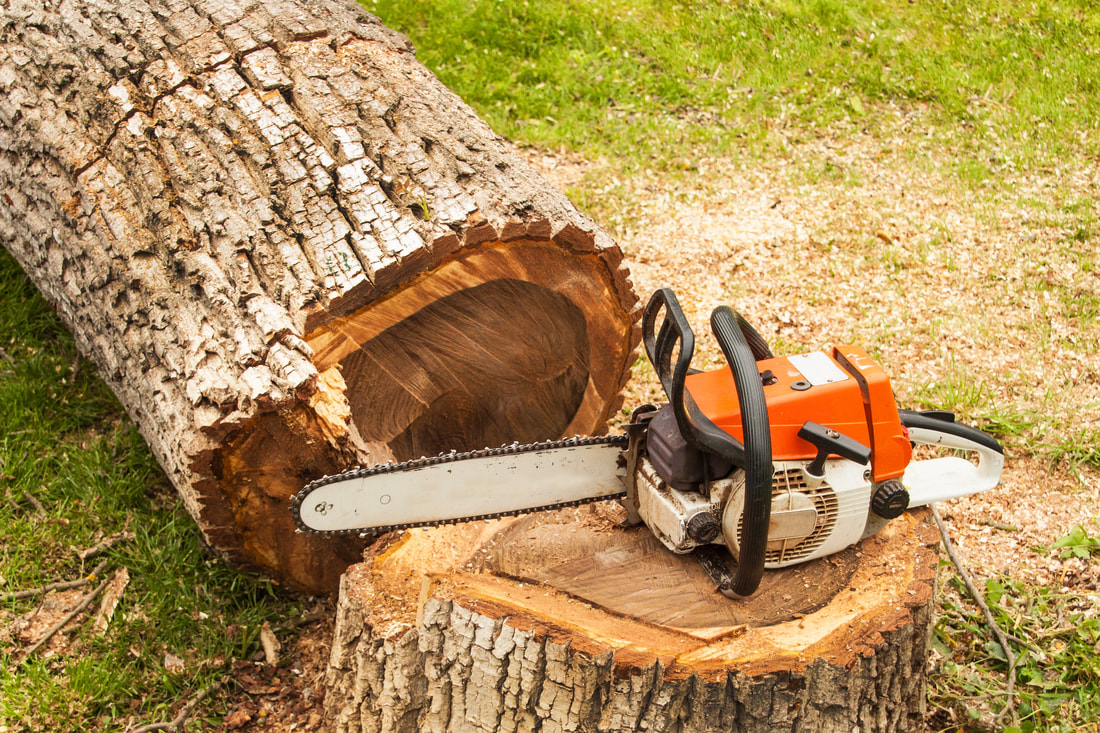 How to Hire a Tree Service | Outdoors Blog